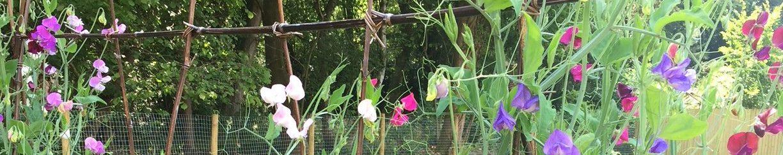 Guy's Garden